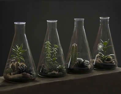Four conical flasks with plants in them are on the ground.