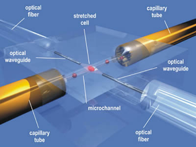 This shows the components of optical fiber.